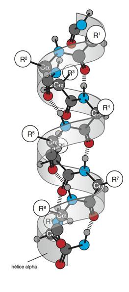 representation proteine